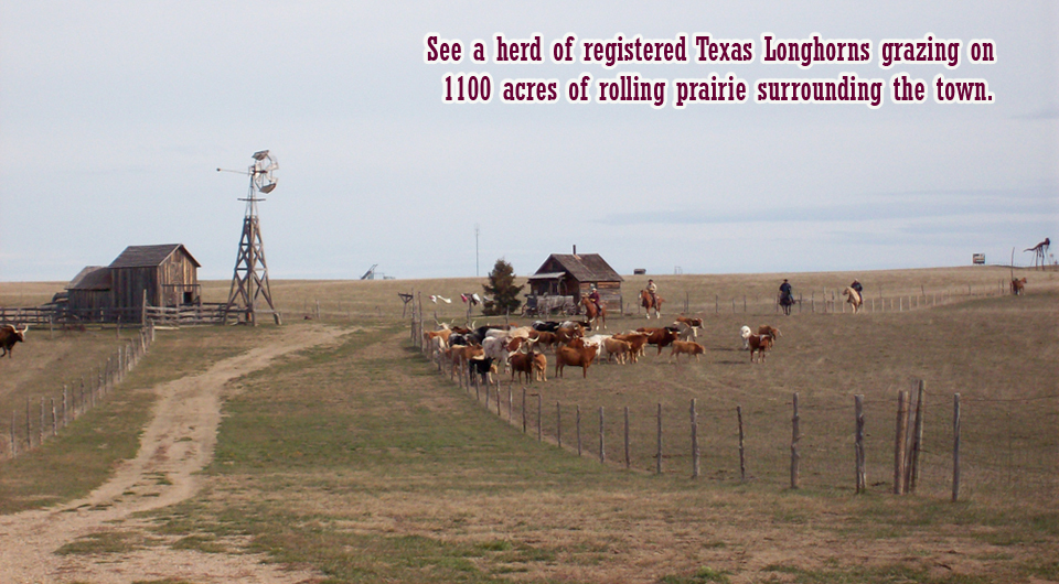 Herd of Longhorns at 1880 Town
